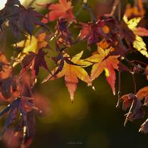 Autumn   #終の記事に添付されている画像