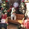 12月のスタジオロンの画像