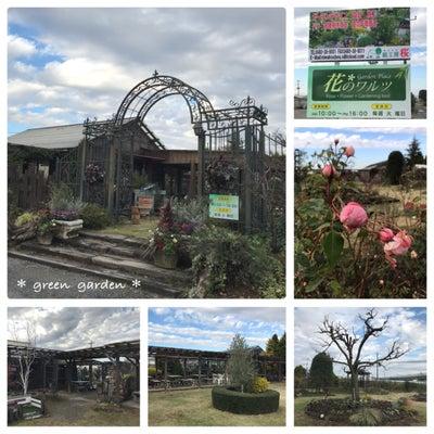 菖蒲のガーデンプレイス花のワルツ♪の記事に添付されている画像