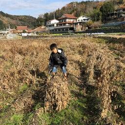 画像 無農薬大豆の収穫完了。ネットショップにて販売 開始しました! の記事より 2つ目