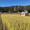 稲刈りスタートの画像