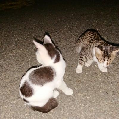 祝・正式譲渡 & 保護猫たち & お礼の記事に添付されている画像