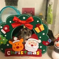 メリークリスマス♪の記事に添付されている画像