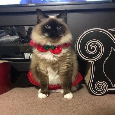 クリスマスコス汐ちゃんの記事に添付されている画像