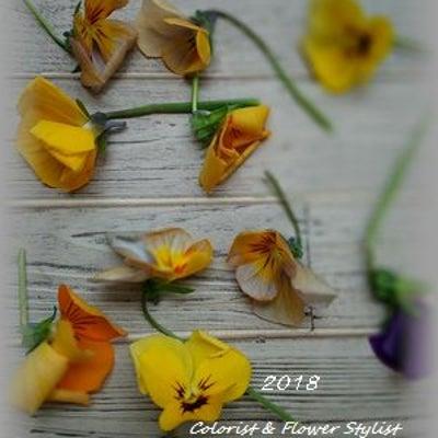 パンジー・ビオラの花がら摘みって毎日しないといけないの?の記事に添付されている画像