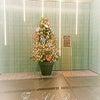 今度は銀座でクリスマス☆の画像