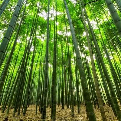 100均竹炭で空間浄化~洗浄・煮沸・天日干し~ 宇宙の法則の記事に添付されている画像