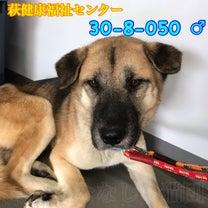 萩健康福祉センター 大型犬収容の記事に添付されている画像