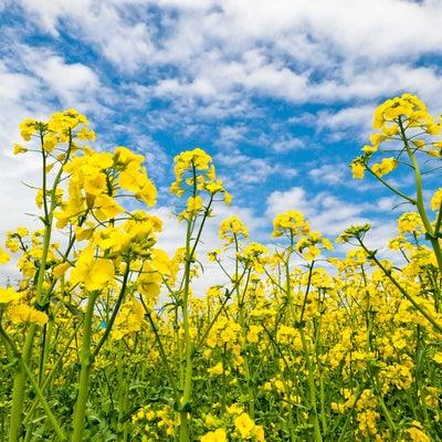 春からはじめる「自分のトリセツ」~自分を大事にの記事に添付されている画像