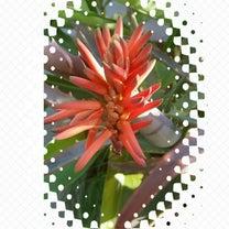 アロエの花の記事に添付されている画像