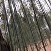 嵐山の竹林!の画像
