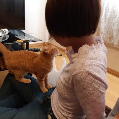 元夫へ『札幌に行くのか行かへんのかどっちやねーーん』の記事に添付されている画像