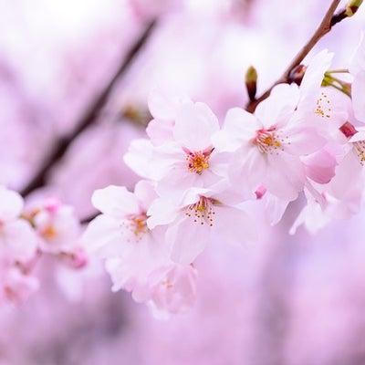 余命は桜が見れるか…再びの宣告の記事に添付されている画像