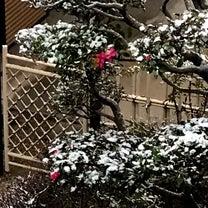 雪!の記事に添付されている画像