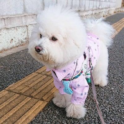 今年のベストフード☆ピンクシャツでお散歩の記事に添付されている画像