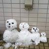 岐阜市に雪が降ったよの画像