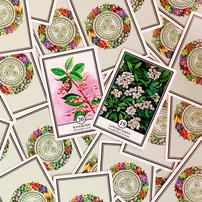 まもなく立春「植物が教えてくれるあなたへのメッセージ」の記事に添付されている画像