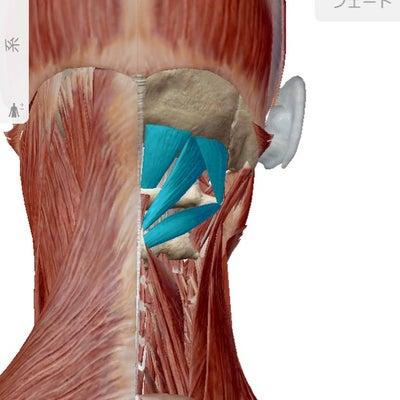 【重要!】後頭下筋の緩め方の記事に添付されている画像