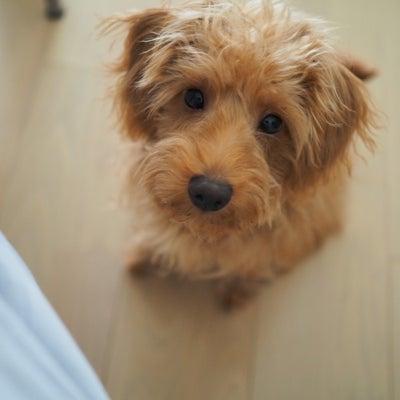 室内犬の完璧におい対策!!の記事に添付されている画像