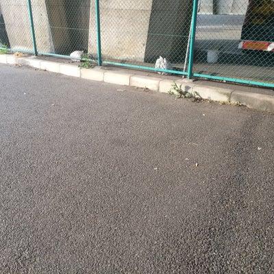 八王子市内のポイ捨てタバコ散乱の記事に添付されている画像
