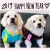 2019  HAPPY NEW YEARの画像