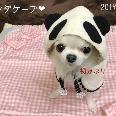 初売り☆2019年☆ルルドールさんの福袋♪の記事に添付されている画像