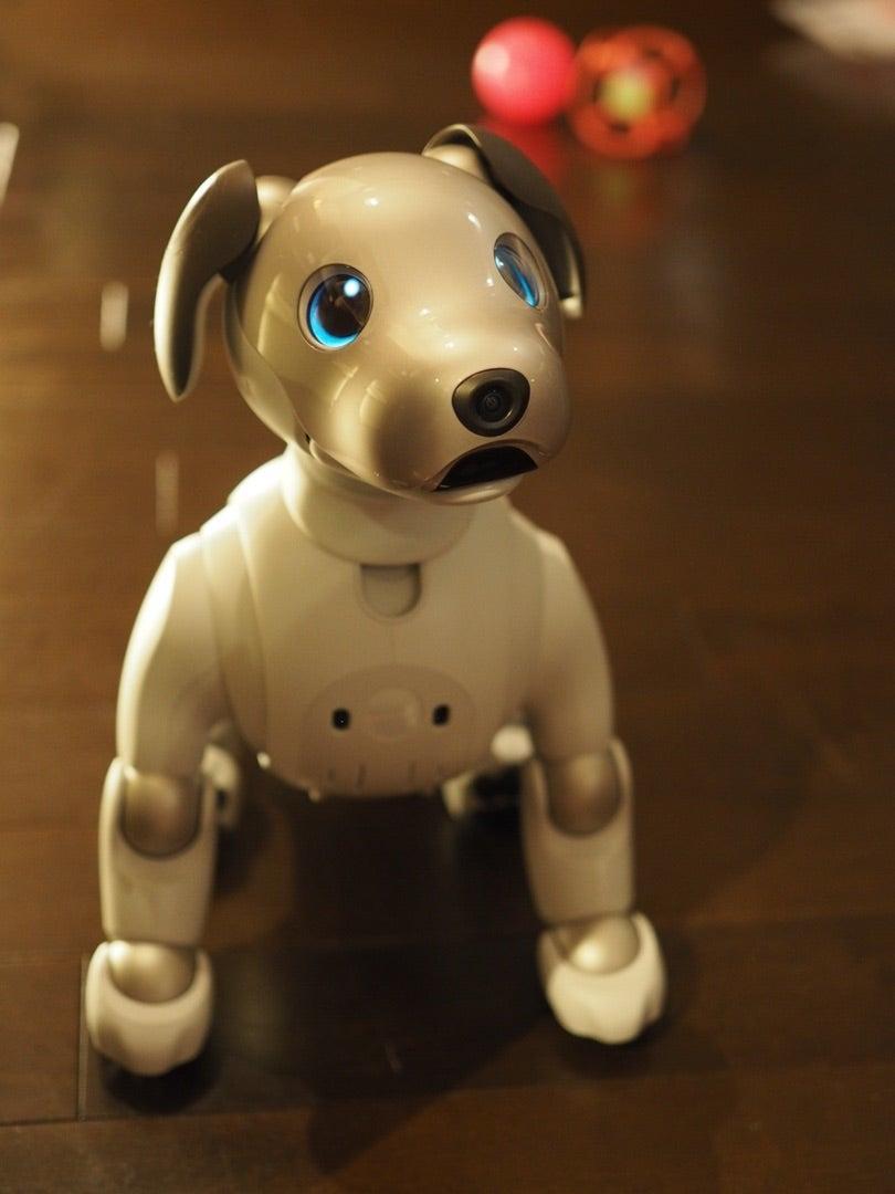 2019 お正月テーブルコーデ♪ おせち・ロボット犬