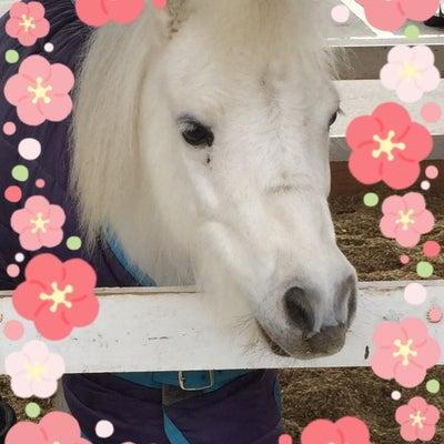 乗馬とピラティスの記事に添付されている画像