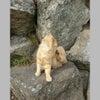尾道の猫の画像