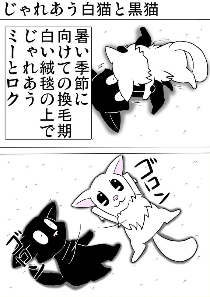 白い絨毯の上でじゃれあって離れる白い子猫と黒い子猫