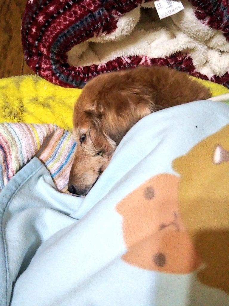 犬 腎 不全 末期 犬の腎臓病が悪化 腎不全の末期 月が近づけば