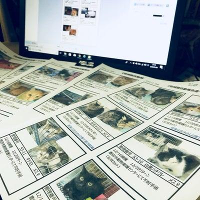 地域猫活動の報告書の記事に添付されている画像