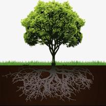 """""""上に成長できない時期は地面に根を伸ばそう""""の記事に添付されている画像"""
