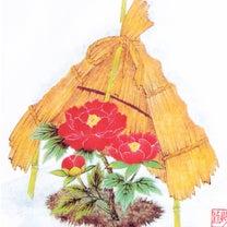 芍薬と牡丹の霜囲い(藁ぼっち)の記事に添付されている画像