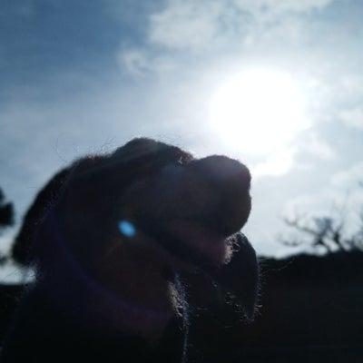 日食を直接見られなくても、感じる事で幸せな気持になりましたの記事に添付されている画像