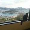 尾道  黒猫のいるレストランの画像