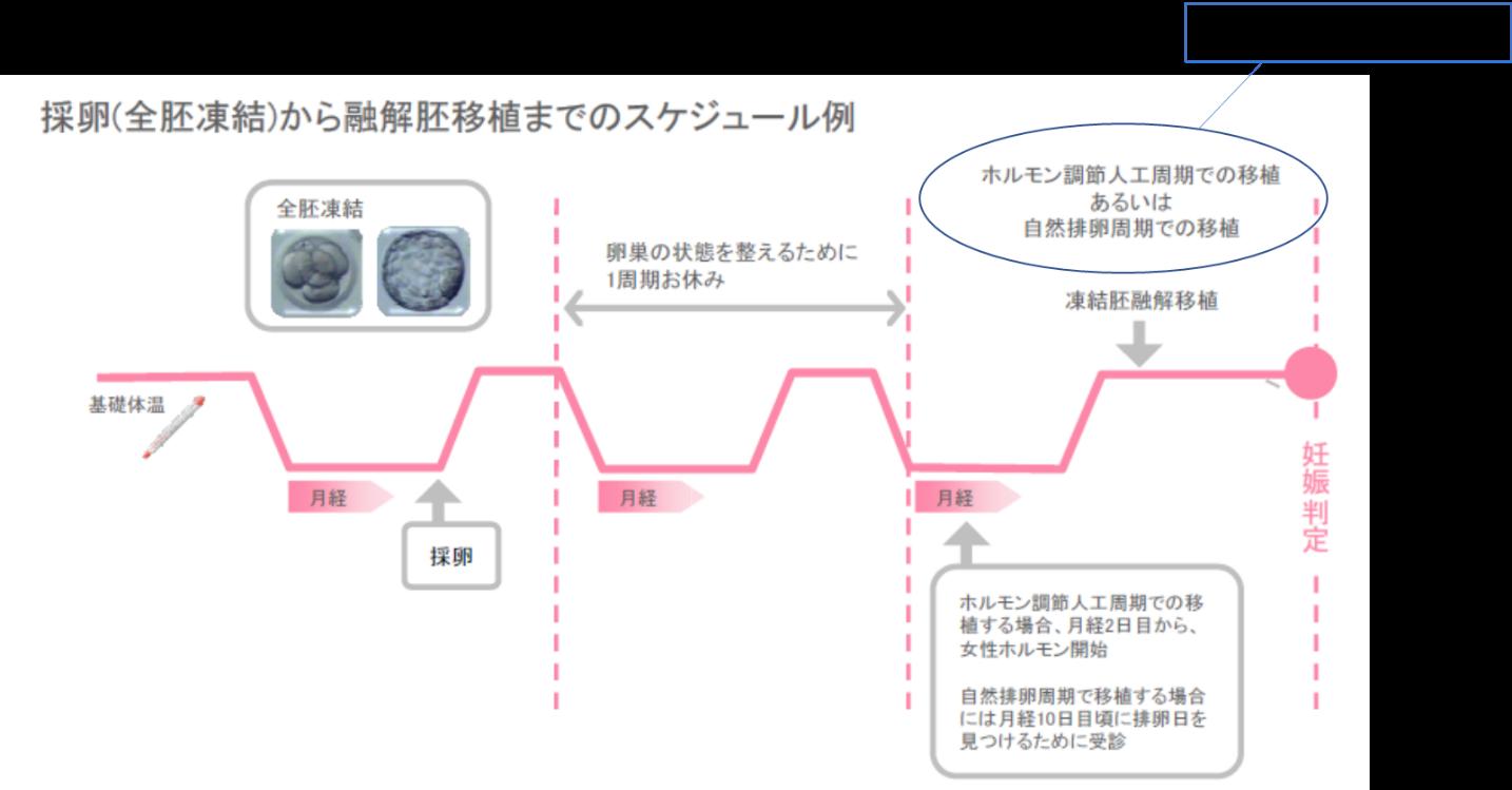 体外 受精 スケジュール