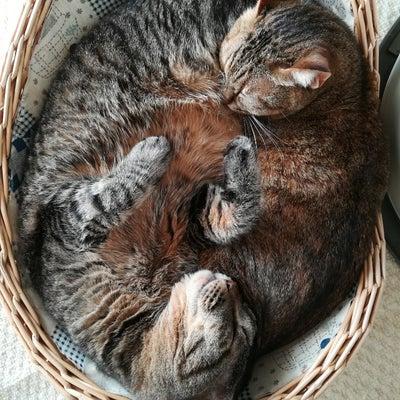 猫のイビキは可愛いけど心配の記事に添付されている画像