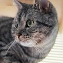 愛猫の大好物…ちゅ~る以外の記事に添付されている画像