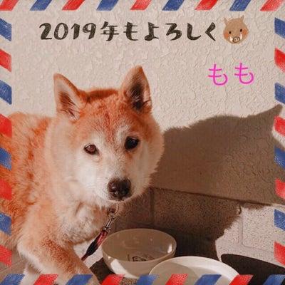 柴犬のももさんからのご挨拶の記事に添付されている画像