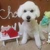 シニア犬対策⇒サロンとお家の連携の画像