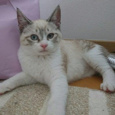 何故魔王家は子猫限定預りなのか。の記事に添付されている画像