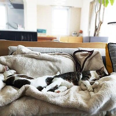 【猫4コマ】映えないインスタの記事に添付されている画像