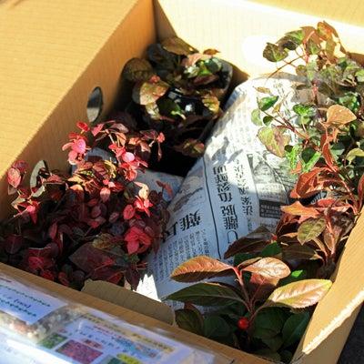 花壇スペースの植え付けの記事に添付されている画像