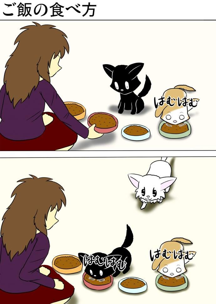 キャットフードの盛られた皿を四つ床に並べる女性と緑色の皿のキャットフードを食べるスコティッシュフォールド猫の傍らで赤い皿のキャットフードを見下ろして食べる黒い子猫と後ろから歩いてくる白い子猫