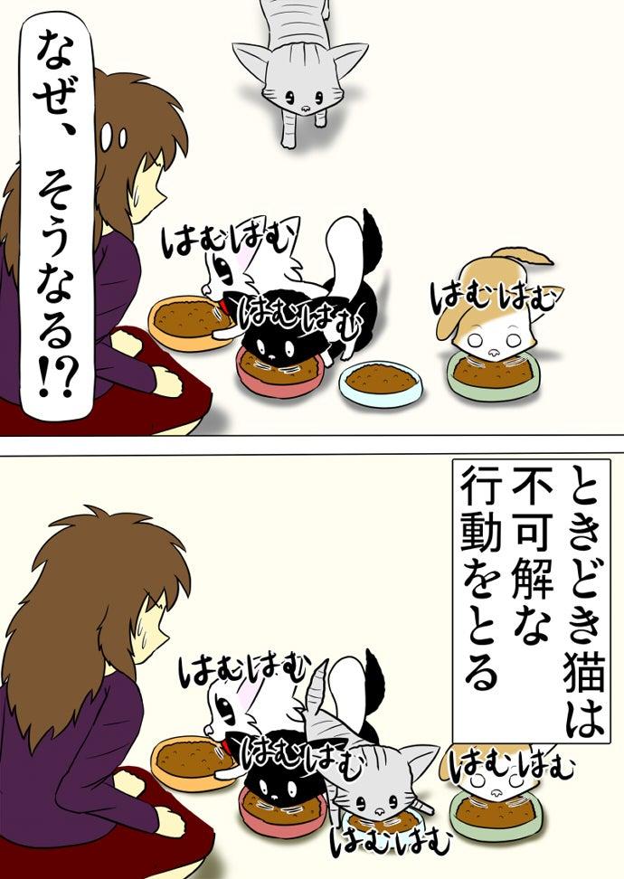 赤い皿のキャットフードを食べる黒い子猫の背中に腹をのっけてオレンジ色の皿のキャットフードを食べる白い子猫とその白い子猫の背中に腹を乗せて水色の皿のキャットフードを食べるアメリカンショートヘア猫の傍らで緑色の皿のキャットフードを食べるスコティッシュフォールド猫と呆れて三匹の猫を見下ろす女性