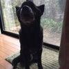 立派な番犬の画像