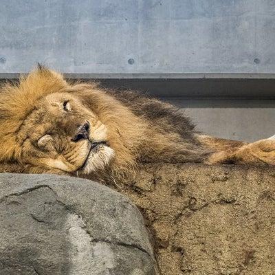 冬の円山動物園 ~室内で過ごす動物たち編の記事に添付されている画像