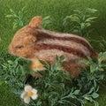#羊毛フェルトの画像