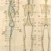 パーソナルトレーニングは姿勢チェックから!の画像